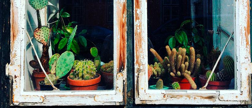plants through the window